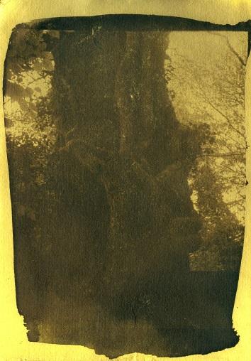 Cyanotype na het tinten